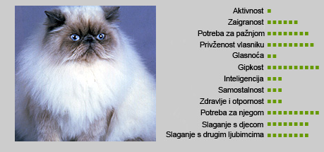 Himalajska mačka - Karakteristike
