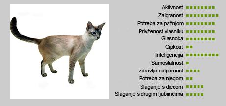 Javanska mačka - Karakteristike