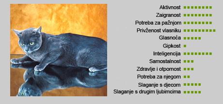 Korat mačka - Karakteristike