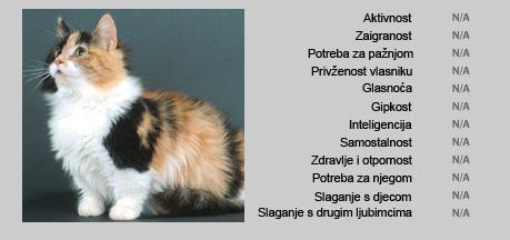Munchkin mačka - Karakteristike