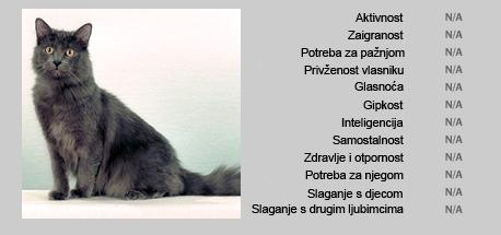 Nebelung mačka - Karakteristike