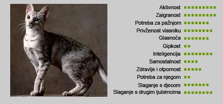 Ocicat mačka - Karakteristike