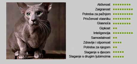 Orijentalna mačka - Karakteristike