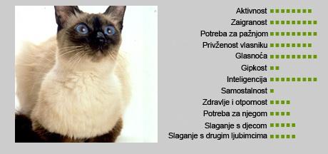 Balineška mačka - Karakteristike