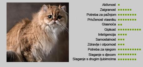 Perzijska mačka - Karakteristike