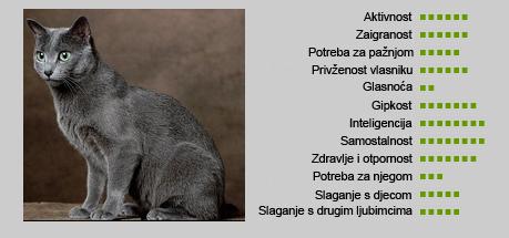 Ruska plava mačka - Karakteristike