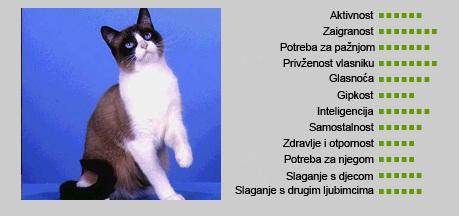 Snowshoe mačka - Karakteristike