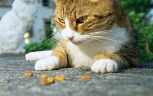 Prehrana izbirljive mačke