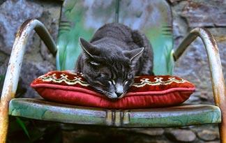 Koliko dugo mačke žive