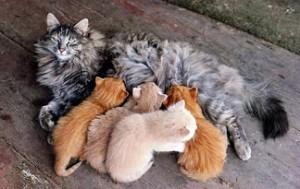 Mačići i dojenje