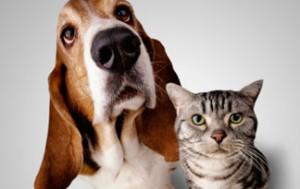 Kako sprijateljiti psa i mačku?