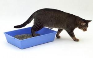 Mačke i mokrenje