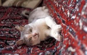 Zašto mačke masiraju