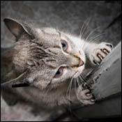 Problemi u ponašanju mačaka